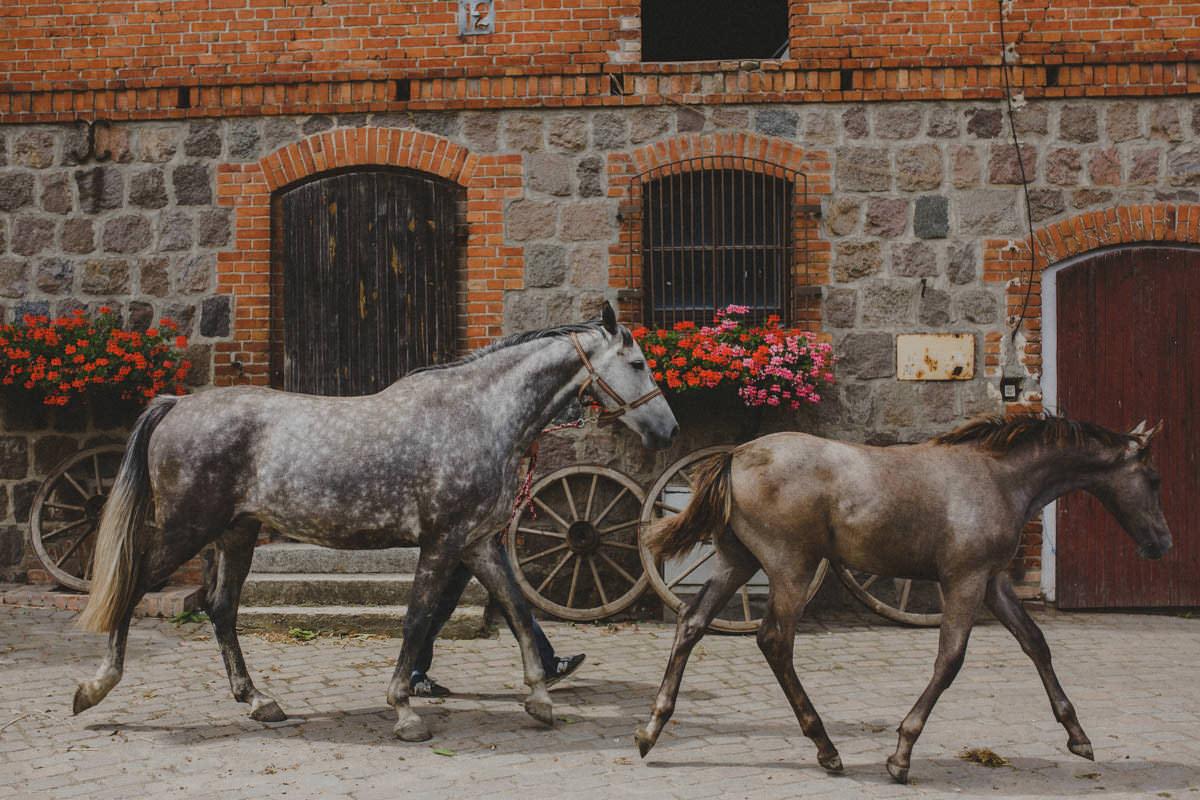 sesja narzeczeńska w stadninie koni