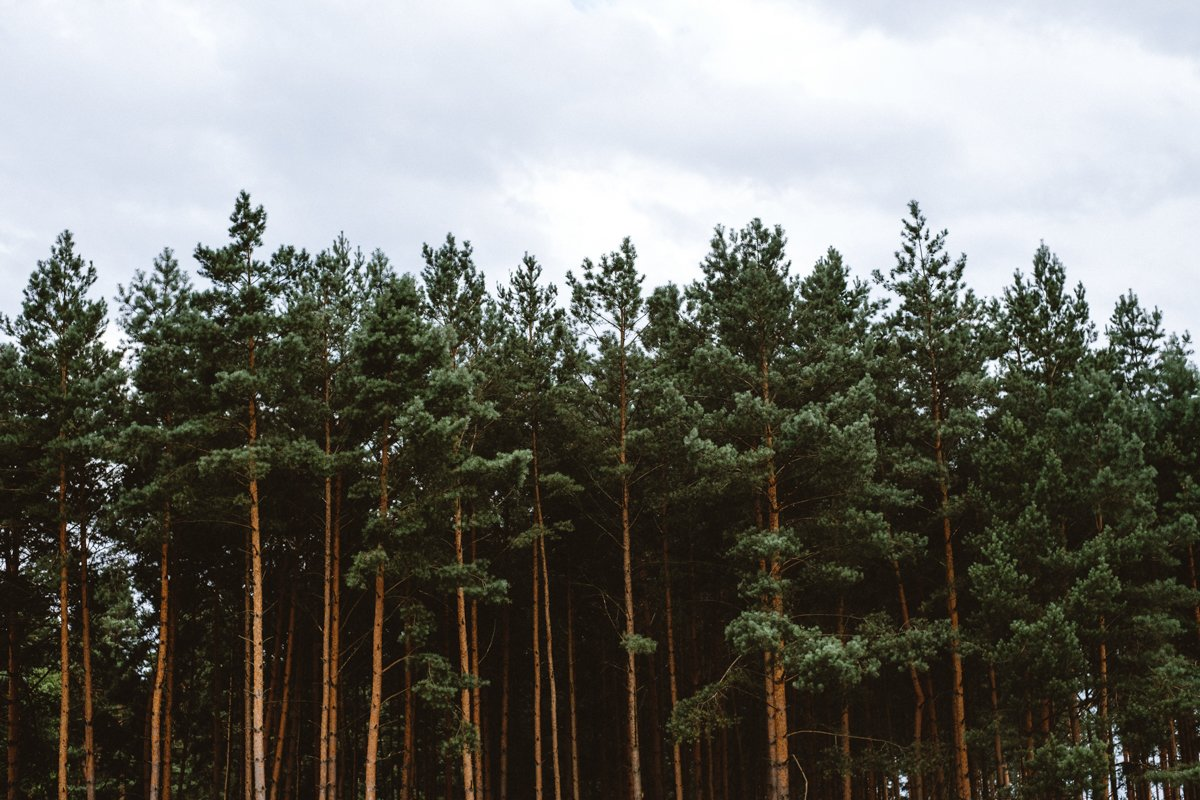 barnówko w sam las